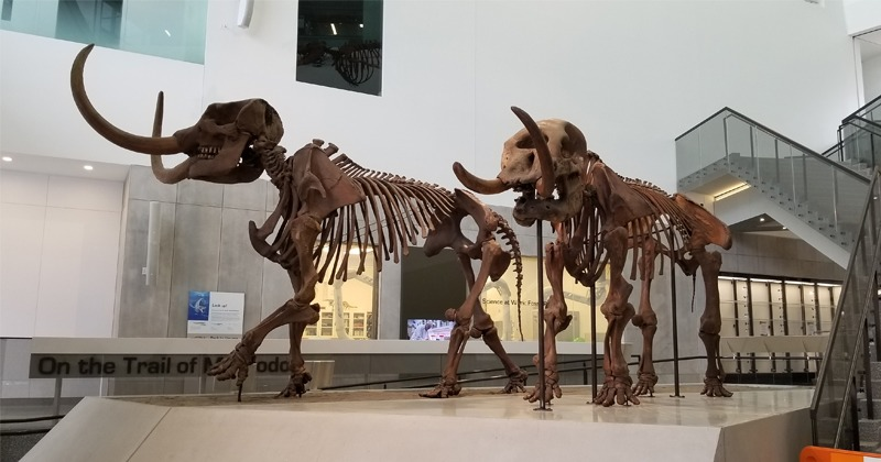 Mastodons in the Atrium
